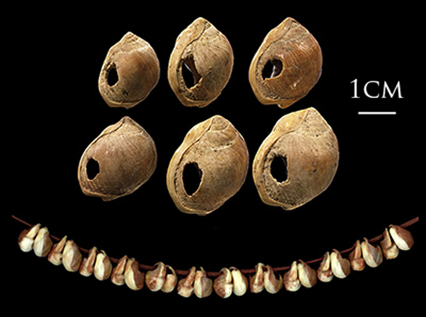 Six-of-the-Nassarius-kraussianus-marine-shell-beads-from-Blombos-Cave-South-Africa-c