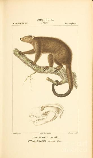 planches-by-paul-gervais-zoological-atlas