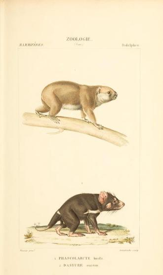 zoological-atlas-paul-gervais